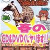 春のCD&DVDくじやります!!